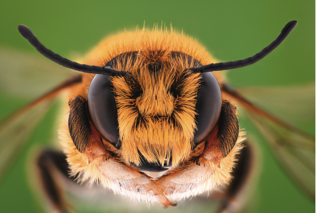 learning-about-the-c-word-from-bees